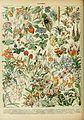 Adolphe Millot fleurs D.jpg