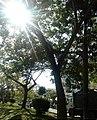 Afternoon view.jpg