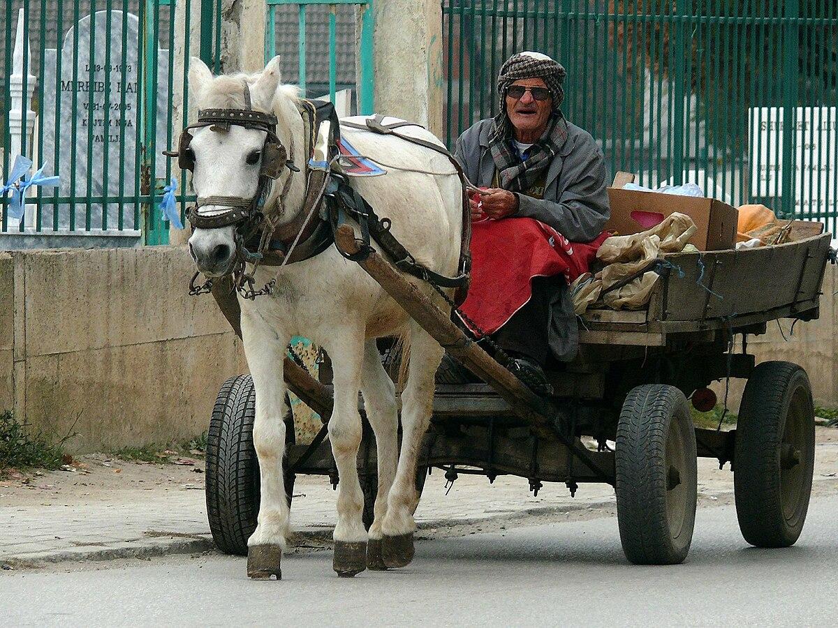 Albanees Paard Wikipedia