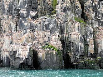Hinlopen Strait - Alkefjellet cliffs in Hinlopen Strait, covered with guillemots.