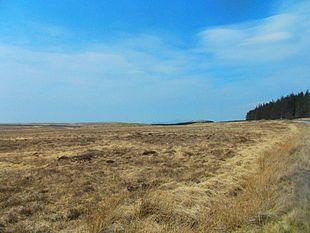 Ambiente di torbiera nelle Highlands scozzesi nei pressi di Lairg