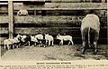 American breeders magazine (1913) (18091775856).jpg