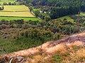 Ancient Native Woodland - geograph.org.uk - 1519510.jpg