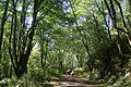 Anderson Point County Park Trail.JPG