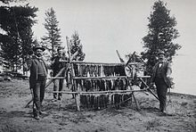 Old photo of anglers with a lot of fish from Yellowstone Lake