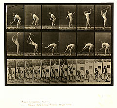 Animal locomotion. Plate 385 (Boston Public Library).jpg