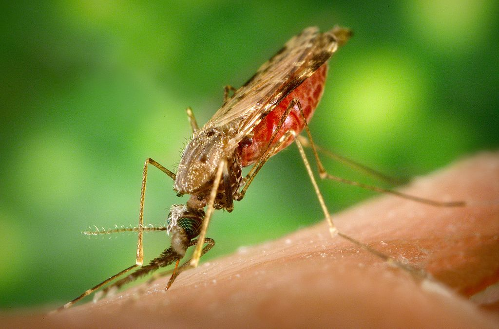 The fight against malaria continues