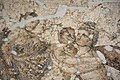 Antakya Archaeological Museum Ge and Karpoi mosaic 6566.jpg