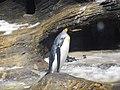 Antwerp Zoo (12210779686).jpg