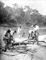 Apor rostas till förråd efter en stor jakt. Det är vrålapor. Rio Madidi. Bolivia - SMVK - 005042.tif