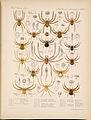 Arachnida Araneidea Vol 1 Table 9.jpg