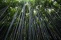 Arashiyama Bamboo Forest, Kyoto, Japan (Unsplash).jpg
