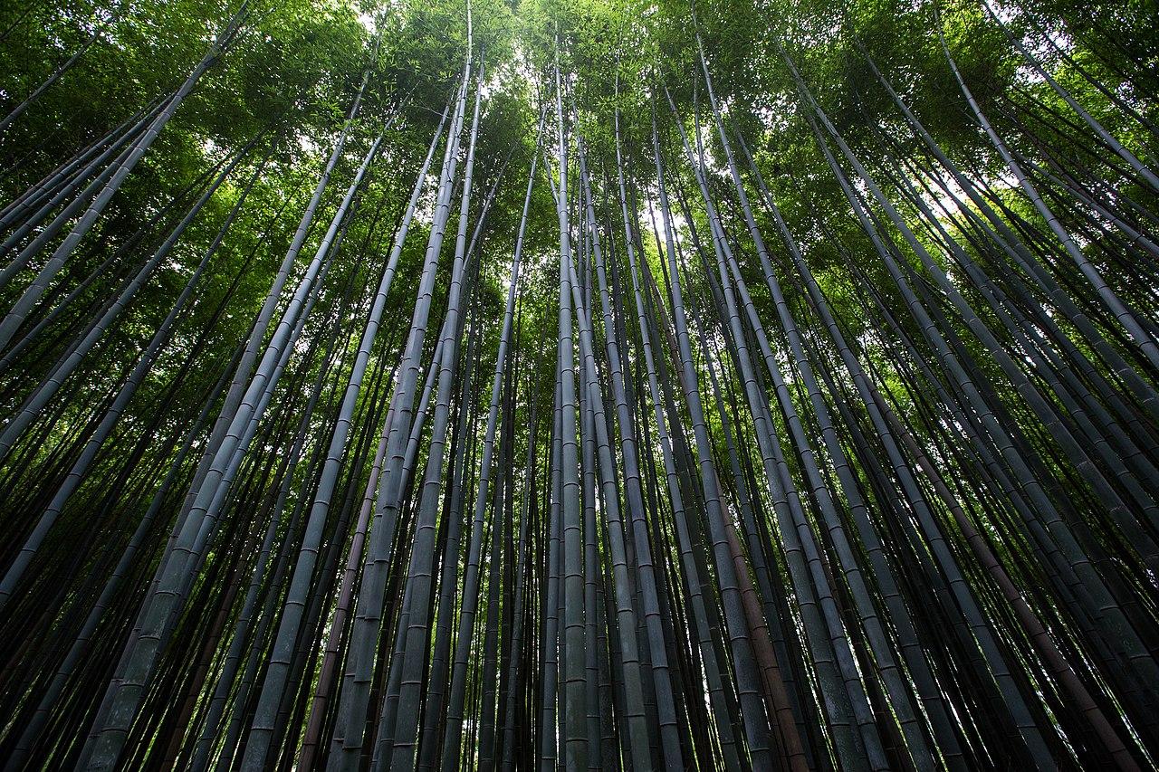 File:Arashiyama Bamboo Forest, Kyoto, Japan (Unsplash).jpg ... | 1280 x 853 jpeg 443kB
