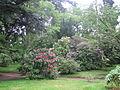 Arboretum Vilmorin.JPG