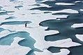 Arctic Sea Ice (6151061573).jpg