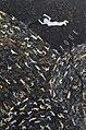 Arezoo Savarpour's Painting 11.jpg