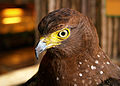Ark Avilon Phil Serpent Eagle.jpg