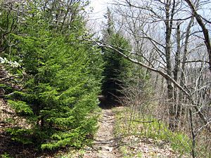 Art Loeb Trail - Image: Art Loeb Trail