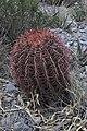 Arteaga, Coah., Mexico - panoramio (6).jpg