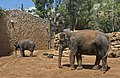 Asian-Elephant-Jerusalem-Jerusalem-Biblical-Zoo-IZE-322a.jpg