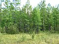 Asinovsky District, Tomsk Oblast, Russia - panoramio (123).jpg