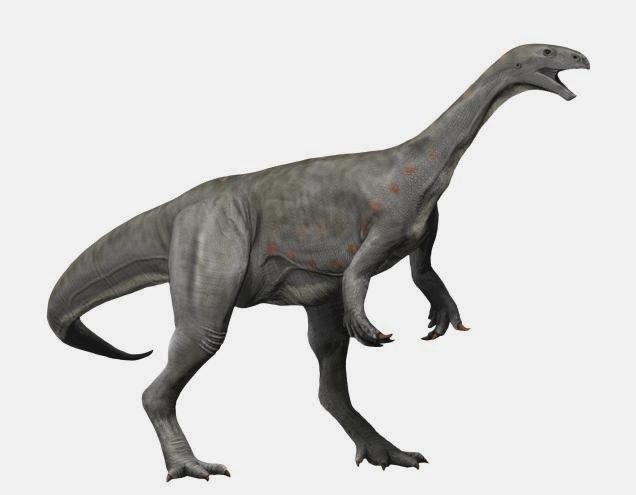 Asylosaurus NT
