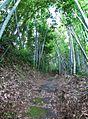 Atago shrine , 愛宕神社 - panoramio (9).jpg
