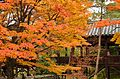 Autumn foliage 2012 (8252592203).jpg