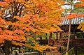 Autumn foliage 2012 (8252592203).jpg