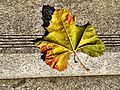 Autumn leaf.jpeg