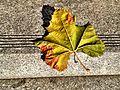 Autumn leaf.jpeg