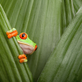 Avatar frog.png