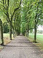 Avenue of trees - geograph.org.uk - 250930.jpg