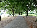 Avenue of trees Wye River Side - geograph.org.uk - 1506563.jpg