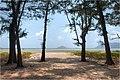 Bãi biển Lò Vôi Côn Đảo - panoramio.jpg