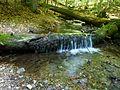 Bachlauf im Nationalpark.jpg