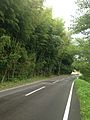 Bamboos on the side of Saga Prefectural Road Route 292 in Ezaruki, Karatsu, Saga.jpg