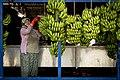 Banana Worker (220485139).jpeg