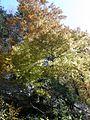 Barve jeseni (2954404049).jpg