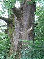 Baum Lienz 2.jpg