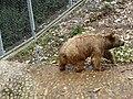 Bear (2380422628).jpg