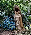 Beaver felled Sweet Gum tree at Oceana Pond LR.jpg