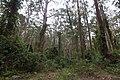 Benandarah NSW 2536, Australia - panoramio (53).jpg