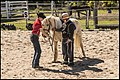 Benjamin at Riding School 3 (29260982295).jpg
