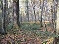 Beograd Orman ağaçlar - panoramio.jpg