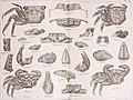 Bericht über die von Herrn Schiffscapitän Storm zu Atjeh, an den westlichen Küsten von Malakka, Borneo und Celebes sowie in der Java-See gesammelten Decapoden und Stomatopoden (1895) (14778499834).jpg