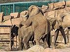 Berlin Tierpark Friedrichsfelde 12-2015 img13 African elephant.jpg