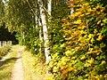Bernau - Herbst im Wald (Autumn in the Woods) - geo.hlipp.de - 29040.jpg