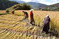 Bhutan - Flickr - babasteve (63).jpg