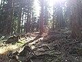 Bielawa, Poland - panoramio (7).jpg